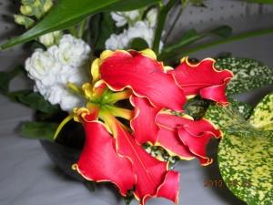 珍しいお花