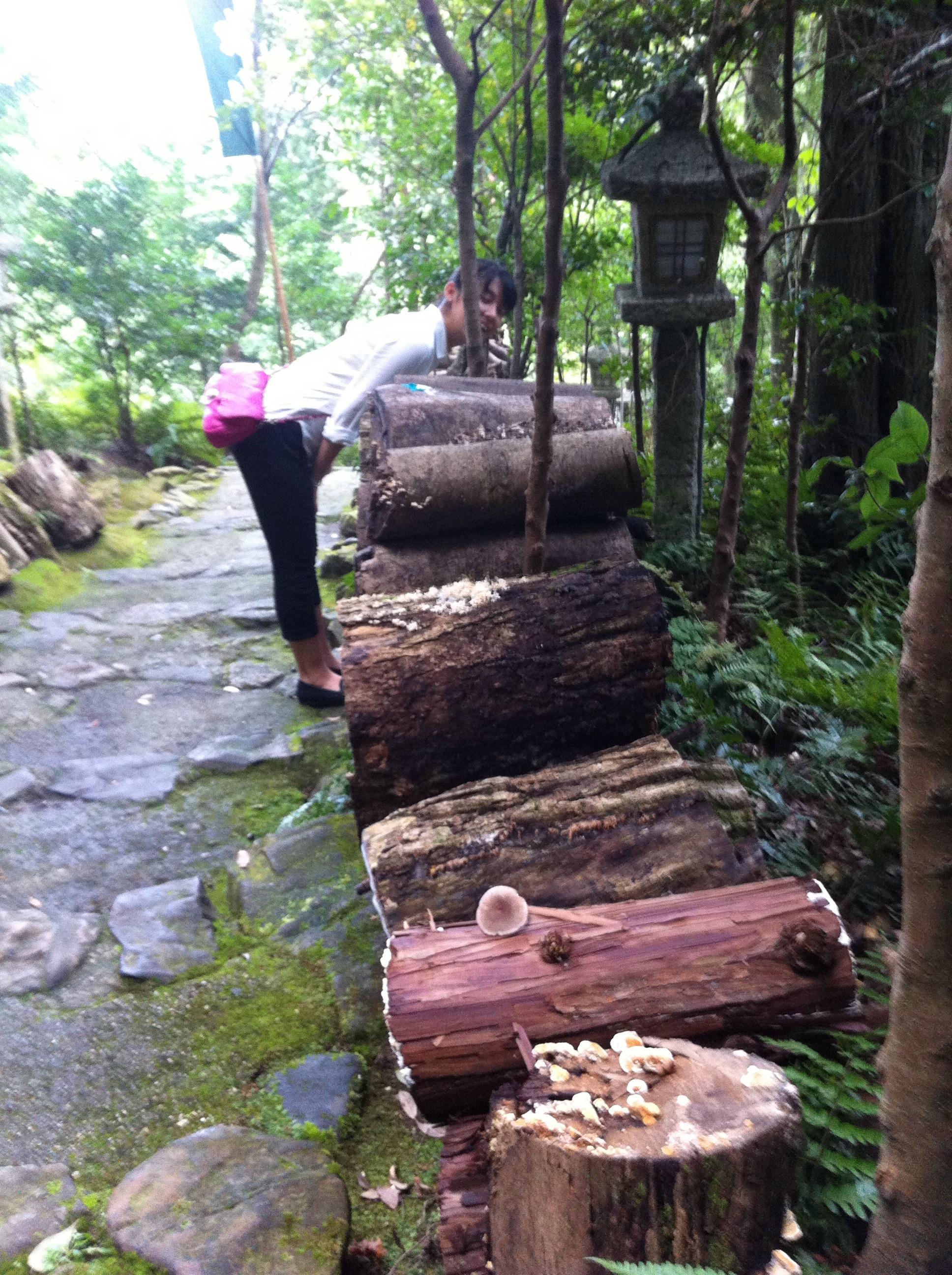 立木観音登山